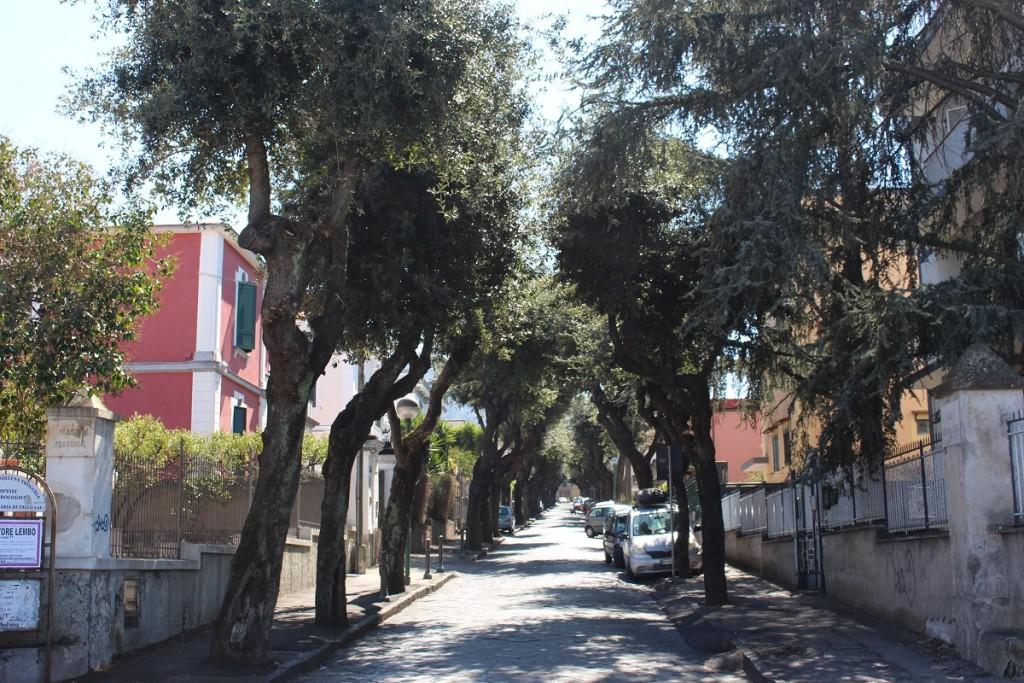 pollena trees